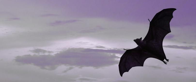 flying batbot