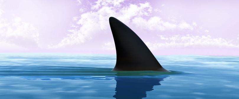 shark spotting drones