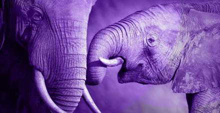 elephants gene